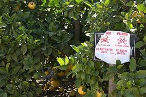 Will An Appeals Court Make The EPA Ban A Pesticide Linked...