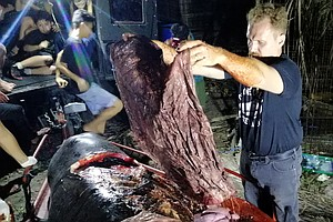 Stomach Of Dead Whale Contained 'Nothing But Nonstop Plas...