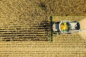 Growing Corn Is A Major Contributor To Air Pollution, Stu...