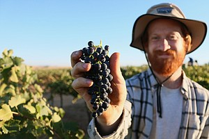 Why Some Wineries Are Becoming 'Certified B Corp' — And W...