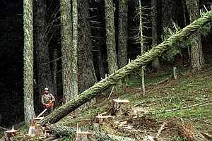 Trump Administration Seeking To Overhaul Forest Management Rules