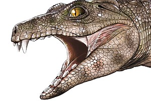 Veggie Surprise: Teeth Of Ancient Crocs Reveal That Some ...