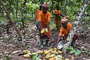 Fair Trade Helps Farmers, But Not Their Hired Workers