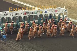 At The T-Rex Races: On Your Mark, Get Set, Rawwrr!