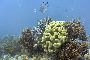 Australia Says Great Barrier Reef Has 'Very Poor' Outlook, Climate Change To ...