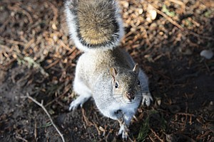 The Other Twitterverse: Squirrels Eavesdrop On Birds, Res...