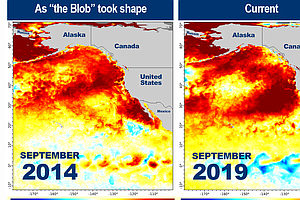Is 'The Blob' Back? Latest Marine Heat Wave Could Pose Ne...