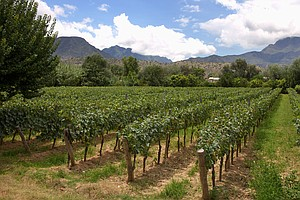 Grown At High Altitudes, Bolivia's Wines Are Rising Stars
