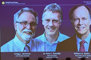 Trio Wins Nobel Prize In Physiology Or Medicine For Work ...