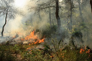 A Forest Expert Team In Spain Fights Fire With Fire — Lit...