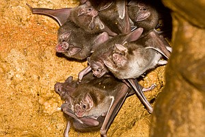 For These Vampires, A Shared Blood Meal Lets 'Friendship' Take Flight