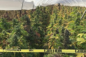 California Seizes More Than $1.5 Billion In Illegal Marij...