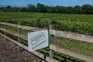 Wine Moguls Destroy Land And Pay Small Fines As Cost Of B...