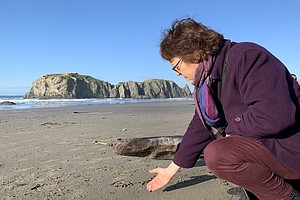 On The Oregon Coast, Turning Pollution Into Art With A Pu...