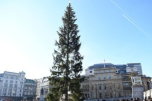 'Britain's Most Famous Christmas Tree' Criticized For Looking Sparse, Droopy ...
