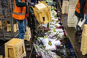 The Netherlands' Huge Flower Sector Wilts As Coronavirus Hurts Business
