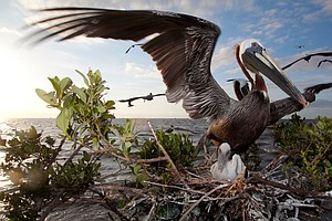 'Where The Land Used To Be,' Photos Show Louisiana Coast 10 Years After BP Oi...