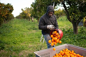 Italy Considers Permits For Undocumented Migrants To Fill A Big Farmworker Gap