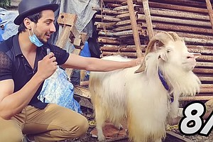 Goat Sales For Eid Were Tanking Due To The Pandemic. So Marketers Got Creative