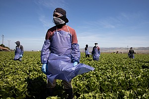 Without Federal Protections, Farm Workers Risk Coronavirus Infection To Harve...