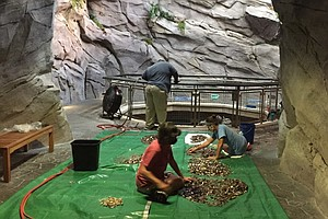 Aquarium Is Washing Old Wishes To Pay Bills During Pandemic