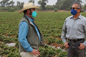 Farm Workers Face Double Threat: Wildfire Smoke And COVID-19