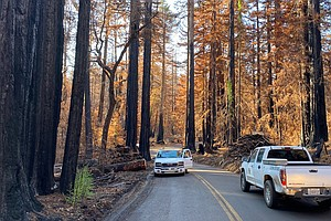 California's Ancient Redwoods Face New Challenge From Wildfires And Warming C...