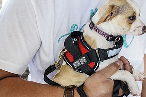 No More Emotional Support Peacocks As Feds Crack Down On Service Animals On P...