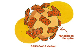 What's Going On With All These Coronavirus Variants? An Illustrated Guide