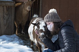 Coronavirus FAQs: If I Have No Post-Vaccine Pain, Is It Working? Plus: Goat D...