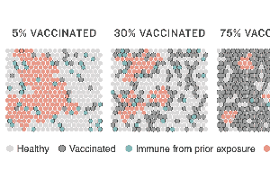 How Herd Immunity Works — And What Stands In Its Way