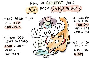 Coronavirus FAQs: Mammograms, Vaccine Ingredients ... And Dogs Who Sniff Masks