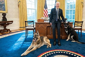 Major Faux Paw: From The White House To The Dog House