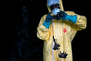 Next Pandemic: Scientists Fear Another Coronavirus Could Jump From Animals To...