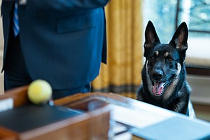 First Dogs Return To White House After Major Biden Causes Minor Injury