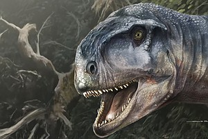 Newly Discovered Dinosaur Was Top Carnivorous Predator In Argentina