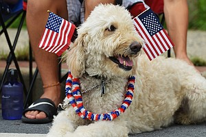 Get Ready For The Fireworks. How To Keep Your Pets Safe And Happy This 4th Of...