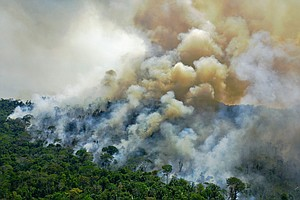 Parts Of The Amazon Rainforest Are Now Releasing More Carbon Than They Absorb