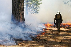With Extreme Fires Burning, Forest Service Stops 'Good Fires' Too