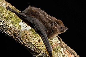 Bats Love To Babble — Just Like Humans