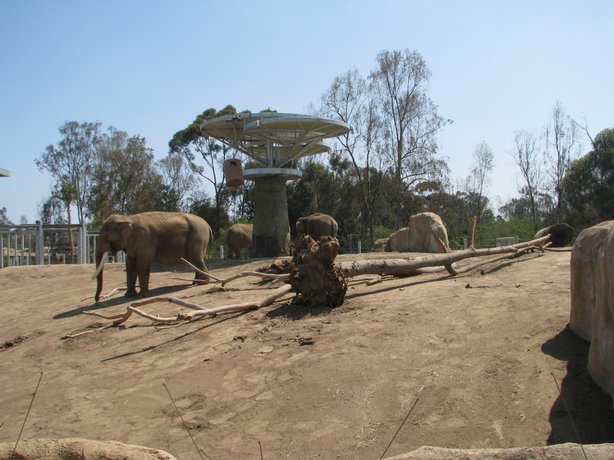 An elephant enjoys the sun at the Elephant Odyssey exhibit at the San Diego Zoo.