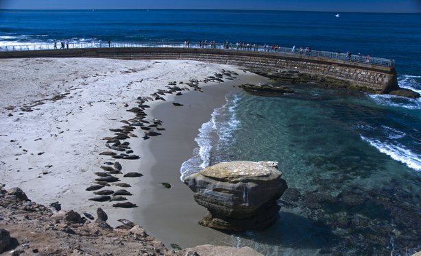 Seals sun bathe at Children's Pool beach in La Jolla.