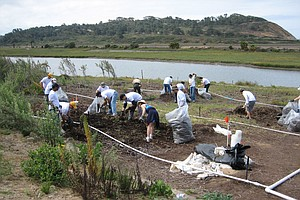 Volunteers Help Torrey Pines State Natural Reserve