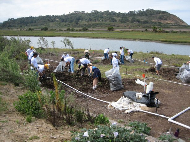 More than 100 employees from Takeda San Diego remove non-native plants along Carmel Valley Road at the Torrey Pines State Reserve.