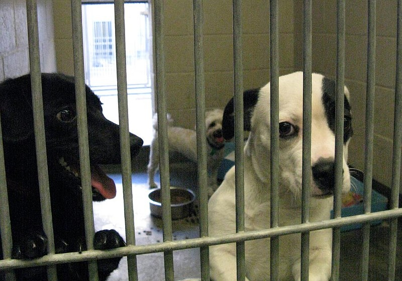 Two dogs greet visitors at the North Central Animal Shelter in Los Angeles, C...