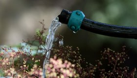 A California resident uses a hose to water plants May 13, 2008 in Berkeley, California.