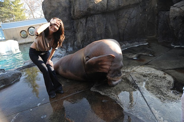 Studies of walrus and sea lion vocal and intellectual abilities are shedding ...