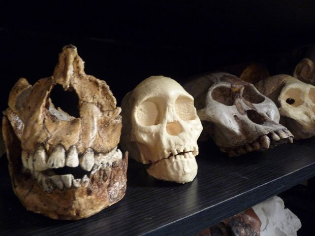 This definitive three-part special on human evolution combines interviews wit...