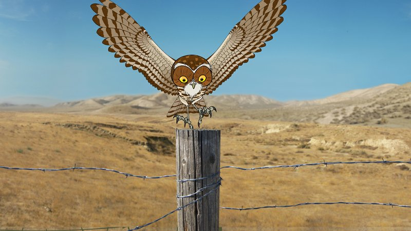 The Hidden Life of the Burrowing Owl