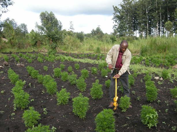 "This Ugandan farmer (profiled in ""The Plant That Cures Malaria"") lost his dau..."